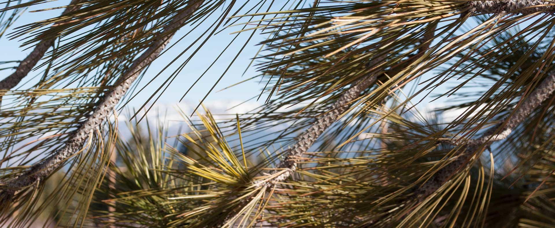 Vegetative Waste Management | Tahoe Donner