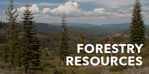 Forestry Resources